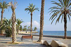 TREDY-fashion Online Magazin. Making-of Shooting in Alicante Spanien. Palmen Landschaft